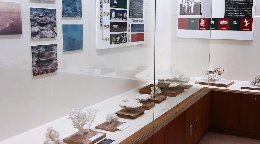 第二展示室のサンゴ