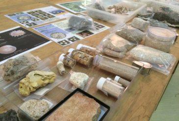 化石ミニ展示