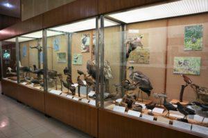 第3展示室_剥製標本
