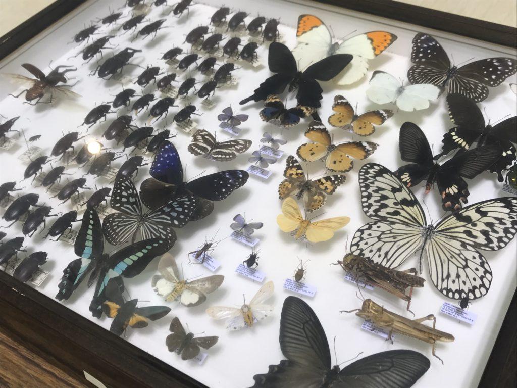 第3展示室_昆虫標本