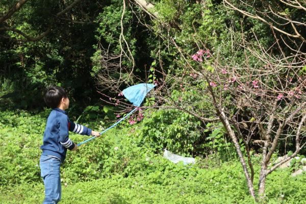 花に止まるチョウを捕まえる参加者