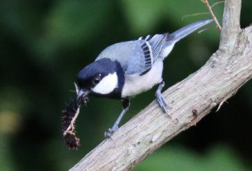 おうちでたのしむもとぶの鳥