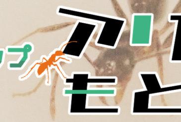 【参加者募集!】アリから学ぶ!もとぶの自然